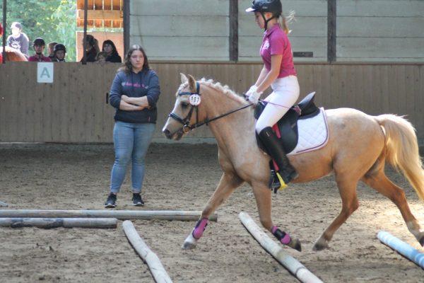 """Vereinsturnier """"Working Equitation"""" am 31. März"""