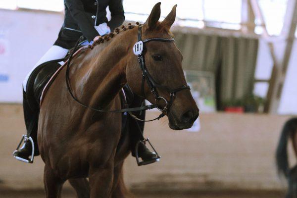 Unsere Pferde: Luna und Allegra